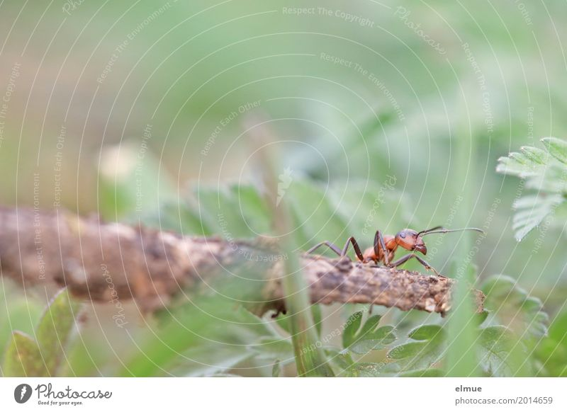 neulich im Kletterwald Natur Wiese Wildtier Tiergesicht Ameise Insekt Arbeit & Erwerbstätigkeit sportlich klein nah Neugier Tapferkeit Tatkraft fleißig