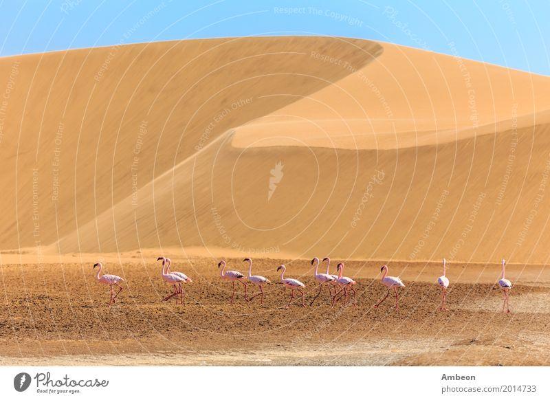 Natur Ferien & Urlaub & Reisen Sommer Farbe Tier Wolken gelb Vogel rosa Sand wild Linie Park Feder Beautyfotografie Düne
