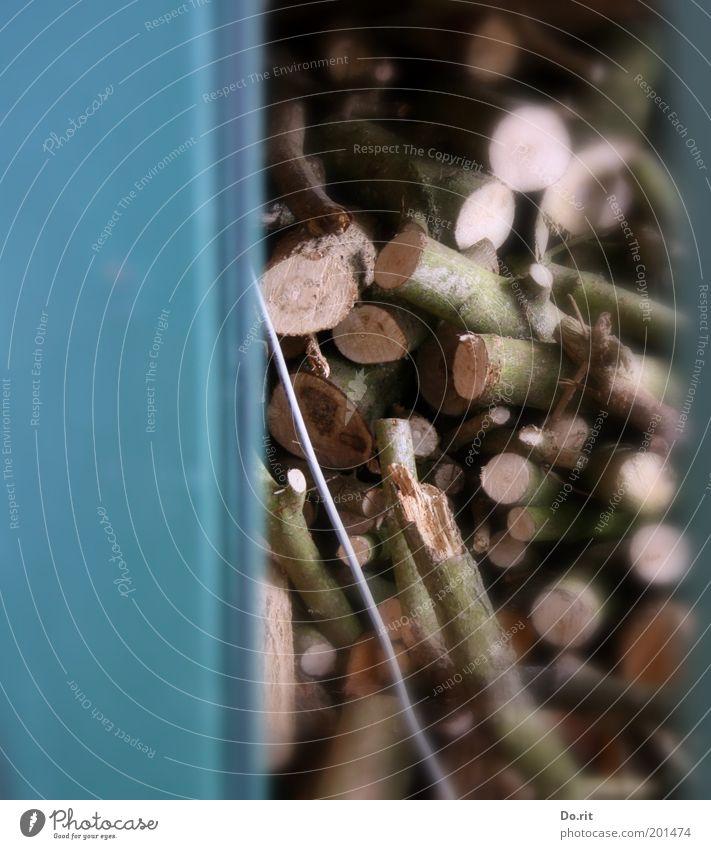 Holz für die nächsten 50 Jahre... Herbst Winter Klima Klimawandel Baum Nutzpflanze trocken Scheune heizen Erneuerbare Energie Farbfoto Außenaufnahme