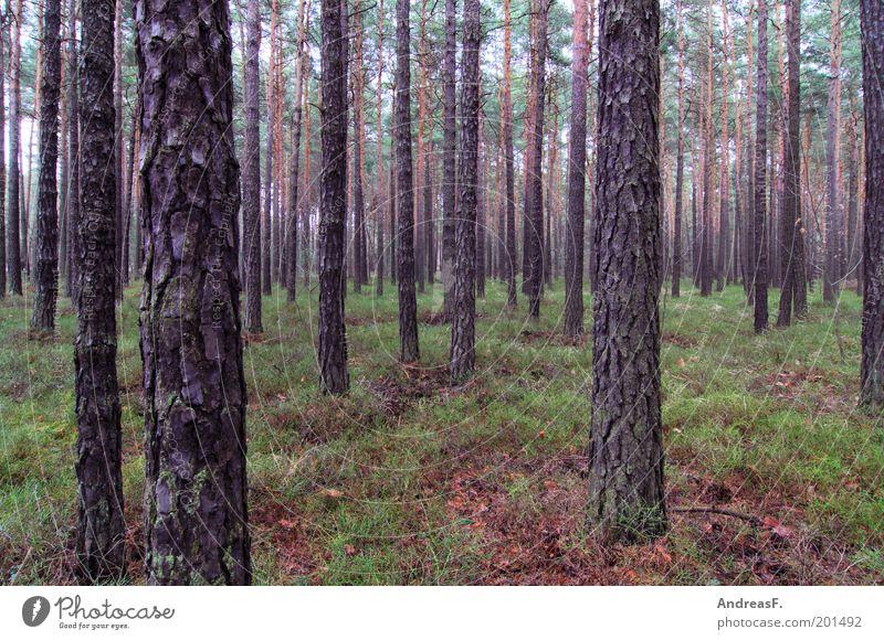 Wald Landwirtschaft Forstwirtschaft Umwelt Natur Landschaft Pflanze Baum Umweltschutz Nadelwald Nadelbaum Moos Kiefer Brandenburg Waldboden Holz Lebensraum