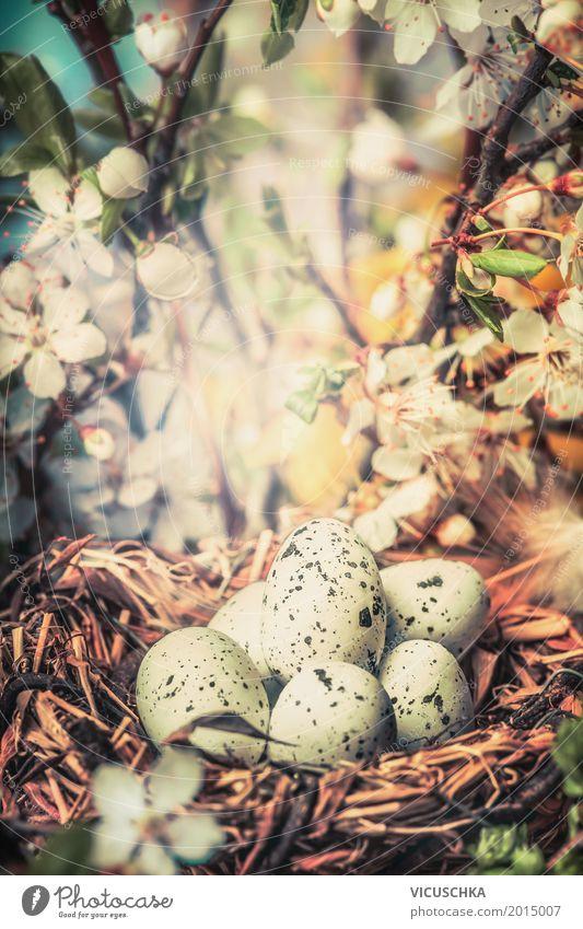Vogel Nest mit Eier im Busch mit Frühlingsblüten Design Garten Ostern Natur Pflanze Sonnenlicht Schönes Wetter Baum Blume Sträucher Blatt Blüte Park