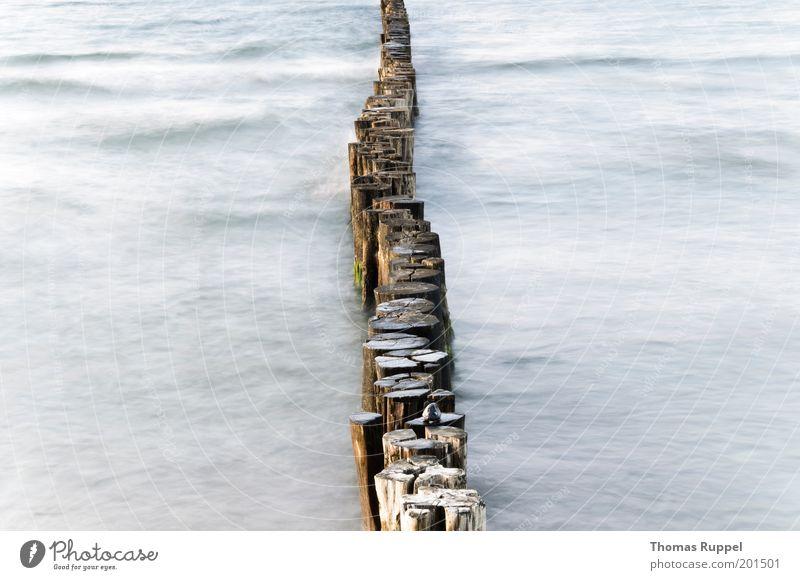Geteilt (hell) Strand Meer Wellen Umwelt Natur Landschaft Wasser Küste Ostsee Buhne schön blau grau Farbfoto Gedeckte Farben Außenaufnahme Menschenleer