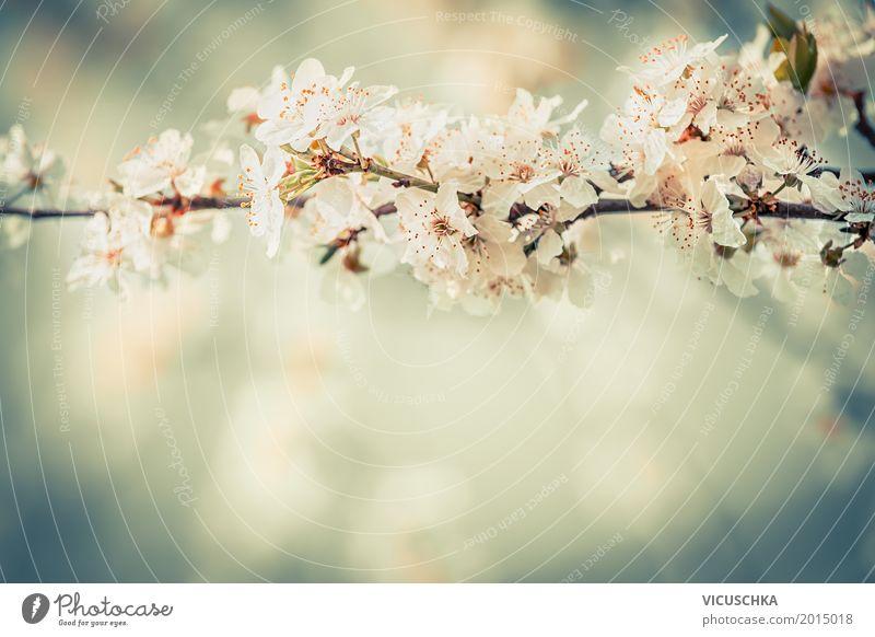 Blüten auf Kirschzweigen im Garten Natur Pflanze schön Baum Blume Blatt Freude Lifestyle Frühling Hintergrundbild Design Park Sträucher Schönes Wetter