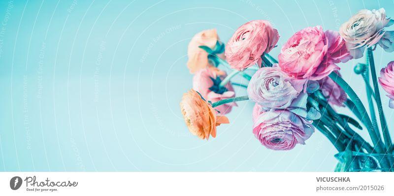 Schöne Ranunkel Blumen auf hellblauem Hintergrund Natur Pflanze Sommer Blatt Leben Blüte Liebe Hintergrundbild Stil Feste & Feiern Design rosa springen elegant