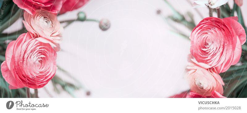 Natur Hintergrund mit pastellroten Blumen Design Feste & Feiern Valentinstag Muttertag Hochzeit Geburtstag Pflanze Rose Blatt Blüte Dekoration & Verzierung
