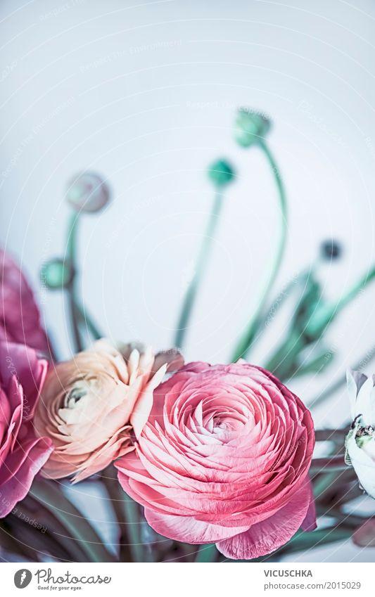 Ranunculus Blumen auf hellblauem Hintergrund Natur Pflanze Blatt Blüte Liebe Stil Feste & Feiern Design rosa Dekoration & Verzierung Geburtstag Geschenk