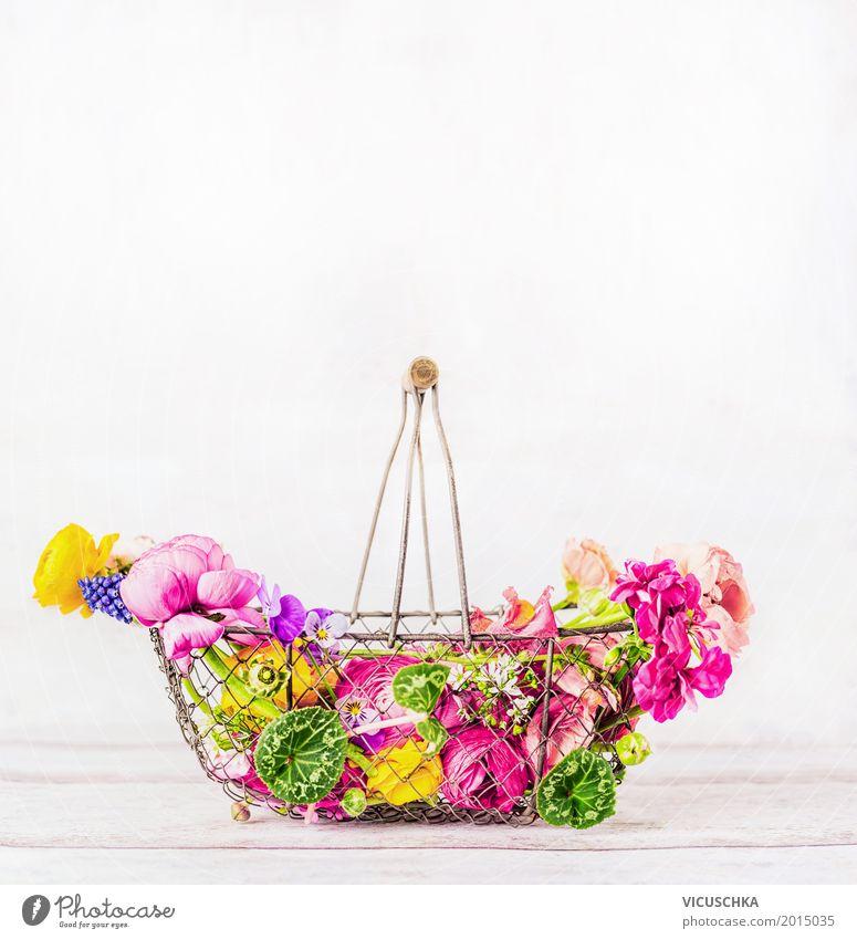 Korb mit schönen bunten Garten Blumen auf weißem Hintergrund Natur Pflanze Sommer Blatt gelb Lifestyle Blüte Frühling Liebe Innenarchitektur Hintergrundbild