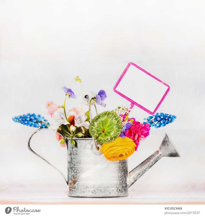 Gießkanne mit Garten Blumen Natur Pflanze Sommer Blatt gelb Blüte Frühling Liebe Hintergrundbild Stil Design Häusliches Leben Dekoration & Verzierung