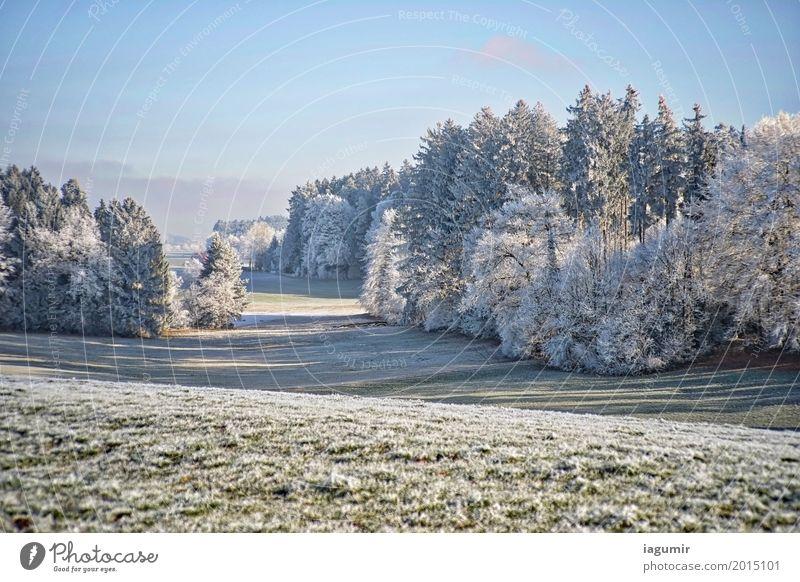 Waldschneise Natur Landschaft Pflanze Himmel Wolkenloser Himmel Sonnenlicht Winter Schönes Wetter Baum Gras Feld Hügel Stimmung ästhetisch Zufriedenheit kalt