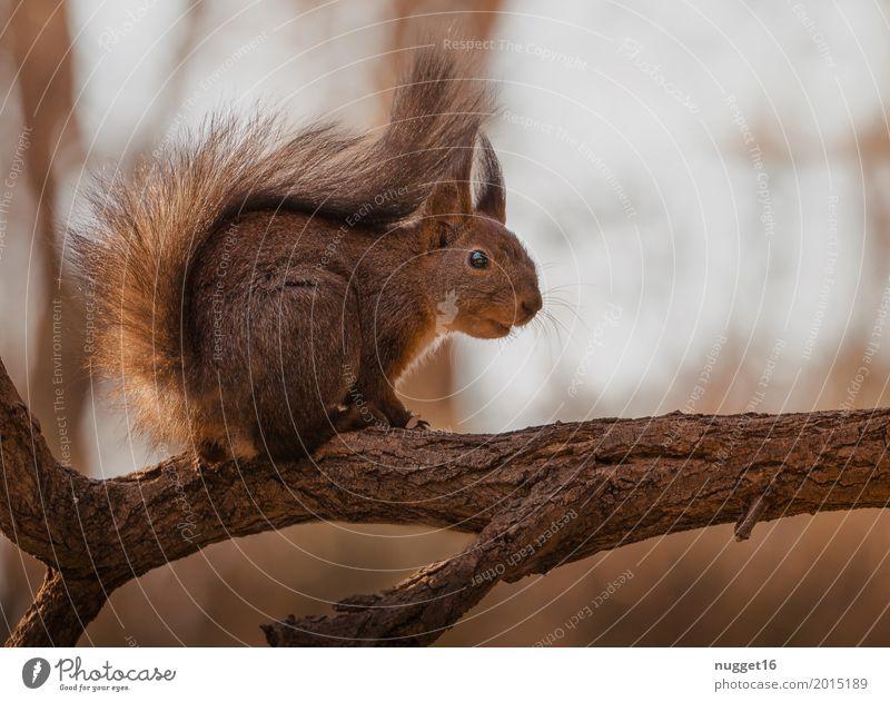 mein kleiner Freund Umwelt Natur Tier Sonnenlicht Frühling Sommer Herbst Schönes Wetter Baum Garten Park Wald Wildtier Fell Zoo Eichhörnchen 1 beobachten