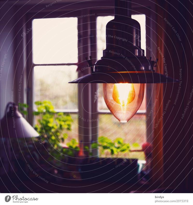 gemütlich daheim Lifestyle Häusliches Leben Wohnung Innenarchitektur Lampe Raum Wohnzimmer Grünpflanze Topfpflanze Fenster leuchten authentisch Freundlichkeit