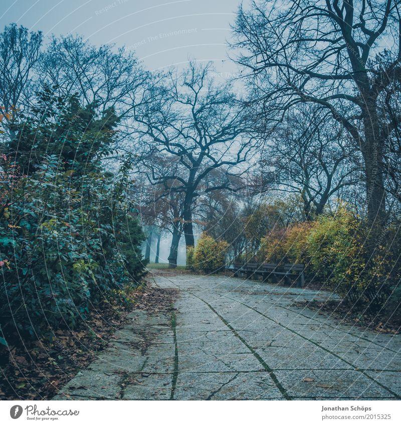 Düsterweg II Natur Landschaft Herbst schlechtes Wetter Nebel Pflanze Park kalt Traurigkeit Trauer Erschöpfung Frustration Verbitterung Erfurt Zukunftsangst