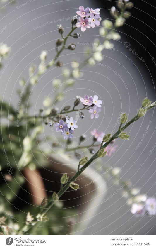 lovely garden Natur schön Blume grün Pflanze Sommer Blüte Frühling klein frisch Wachstum violett einzigartig zart Idylle Blühend