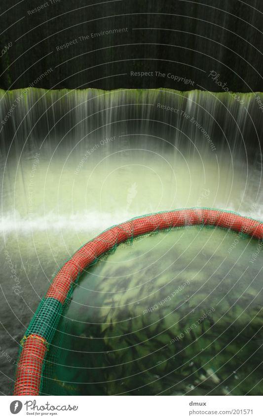 Fischbecken Wasser grün schwarz Wasserfall Langzeitbelichtung Algen strömen Schwarm Nutztier Tier Teich Wasserbecken Fischzucht Fischteich