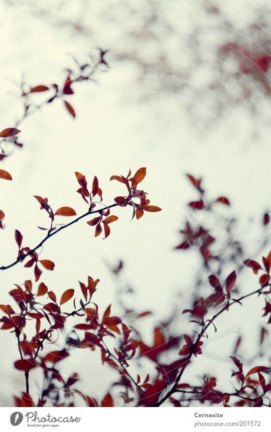 Kette Umwelt Natur Pflanze Sonnenlicht Frühling Schönes Wetter Baum Park Wiese Feld ästhetisch dunkel dünn authentisch einfach Ferne einzigartig Originalität