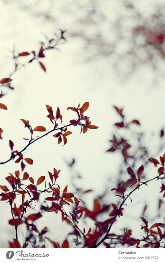 Natur Pflanze Baum rot Blatt Ferne dunkel Umwelt gelb Frühling Wiese außergewöhnlich Park wild Feld authentisch