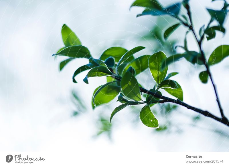 Natur blau grün schön Baum Pflanze Blatt Umwelt dunkel Wiese Gefühle Frühling Park Stimmung Feld Klima