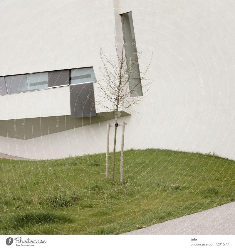 bäumchen Baum Gras Wiese Haus Bauwerk Gebäude Architektur Mauer Wand Fassade Fenster grau grün Farbfoto Gedeckte Farben Außenaufnahme Menschenleer Tag modern
