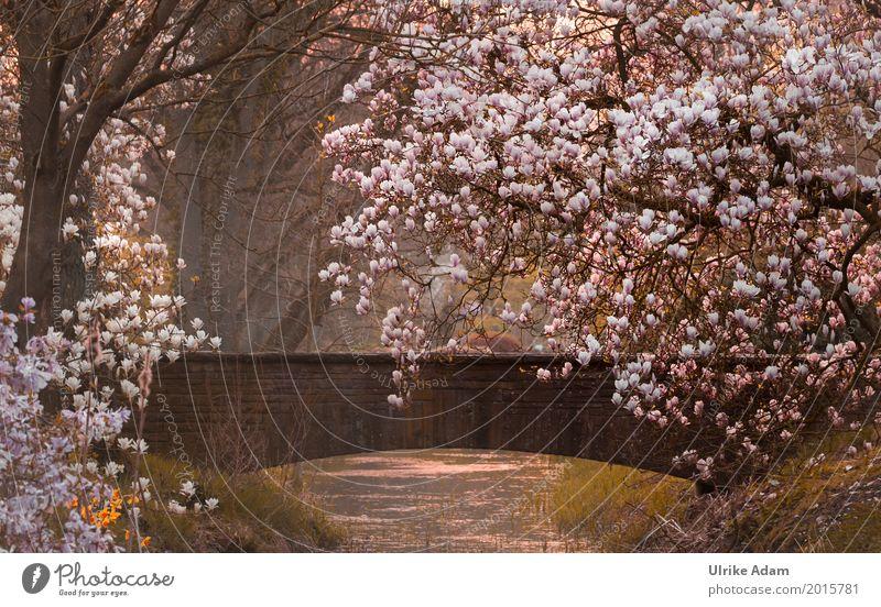Magnolien im Park Natur Pflanze Wasser weiß Baum Landschaft Blume ruhig Umwelt Blüte Frühling Garten Freiheit rosa Dekoration & Verzierung