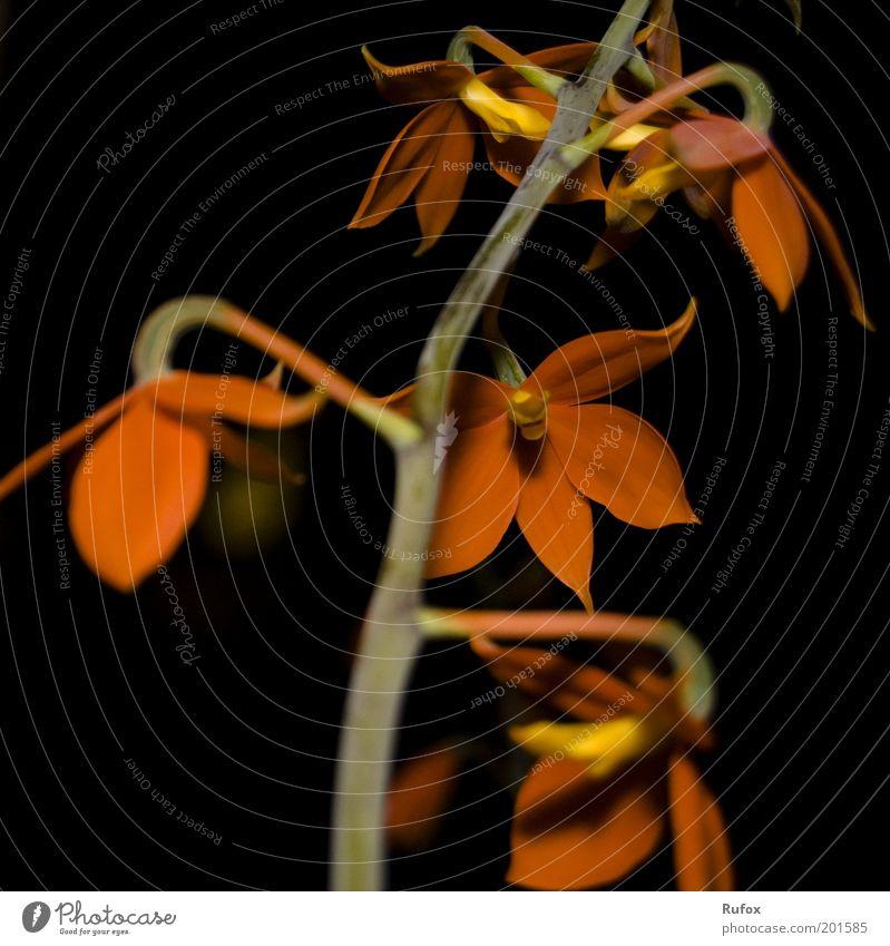 Vom selben Stamm... Natur schön Blume grün Pflanze rot Blatt schwarz gelb Blüte braun orange ästhetisch Stengel Blühend exotisch