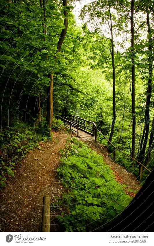 Märchenwald Baum ruhig Wald Erholung Gras Wege & Pfade Zufriedenheit Umwelt Brücke Sträucher Hügel entdecken Duft Fußweg Moos