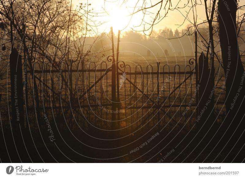Tor Natur schön Baum Sonne gelb Stimmung braun Feld beobachten Zaun Pfosten Morgen Frühlingsgefühle Wildpflanze Lichtfleck