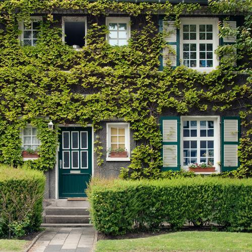 Im Wunderland #3 grün Haus Fenster Garten Architektur Fassade Häusliches Leben Eingang Gebäude Märchen Heimat Efeu Fensterladen lieblich Verhext