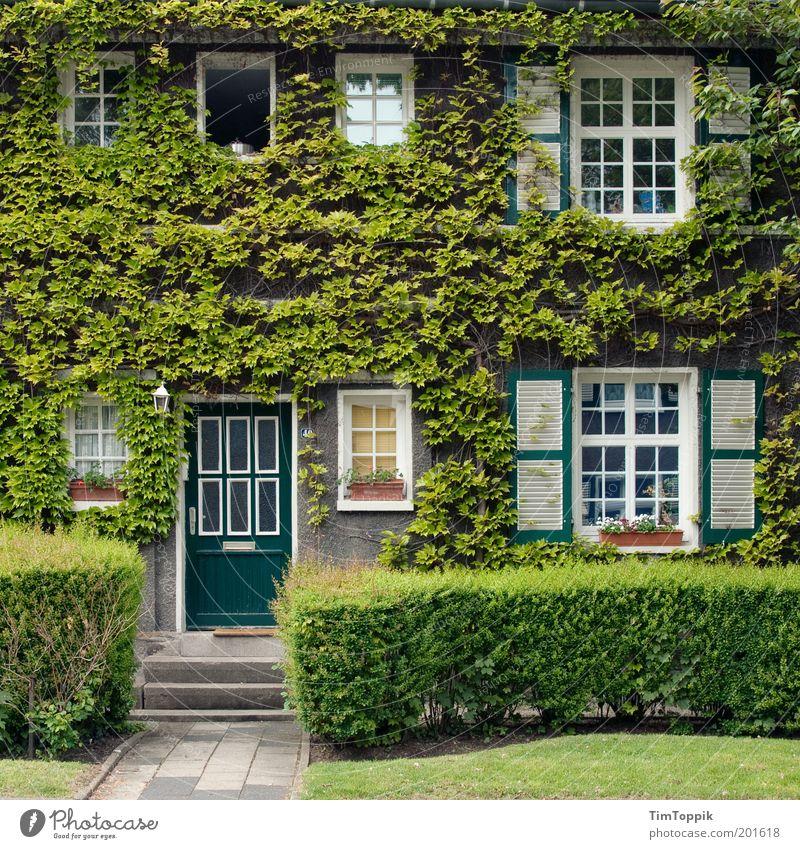 Im Wunderland #3 Haus grün Efeu Fassade Fassadenbegrünung Fenster Garten Häusliches Leben Heimat Verhext Märchen Fensterfront Vorgarten Fensterladen lieblich