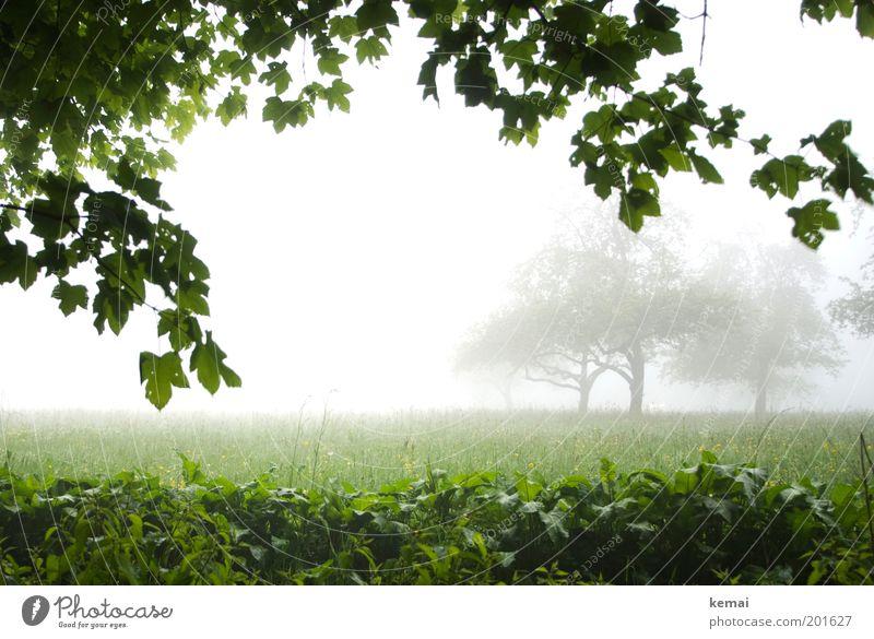 Trübe Aussichten Natur Himmel weiß Baum grün Pflanze Blatt kalt Wiese Gras Frühling Regen Landschaft Feld Nebel Umwelt