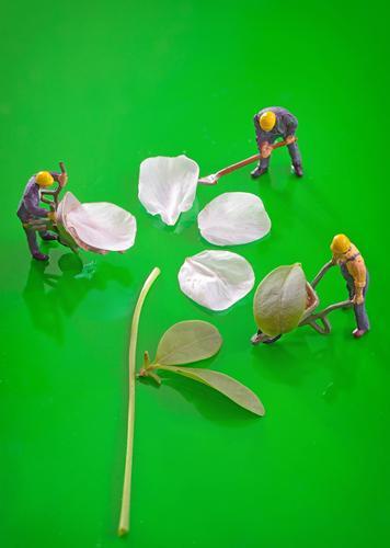 Miniaturfiguren, die arbeiten, um Frühlingskirscheblume zu schaffen grün Blume Blatt Gras Garten Arbeit & Erwerbstätigkeit Erde Figur Gartenarbeit Stapel