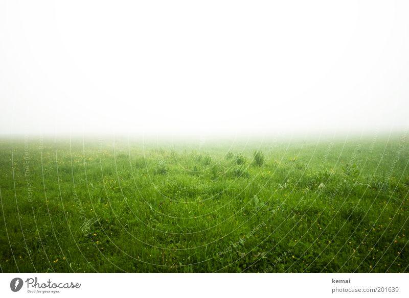 Ins Nichts eintauchen Umwelt Natur Landschaft Pflanze Frühling Klima Wetter schlechtes Wetter Nebel Gras Grünpflanze Wiese bedrohlich kalt nass grün weiß