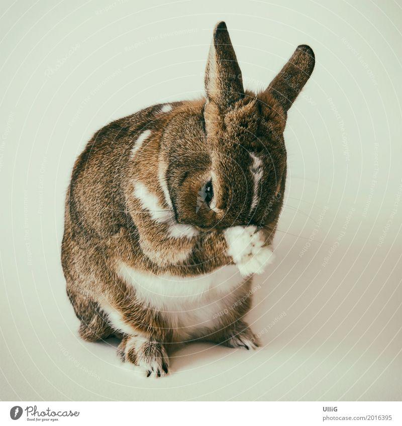 Kaninchen, Hase, Osterhase Tier Haustier Tiergesicht Fell Pfote 1 Fürsorge Identität einzigartig Körperpflege gnothimage Hase & Kaninchen Zwergkaninchen