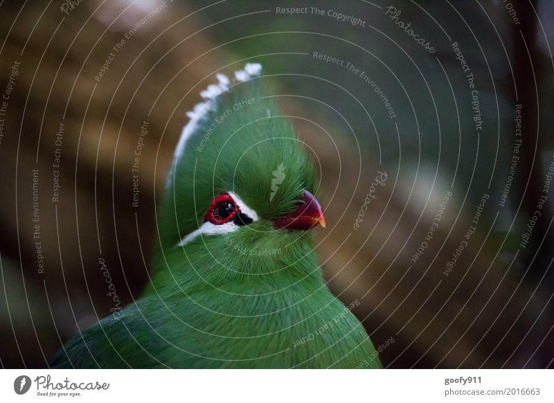 Beobachten!!! Kopf Gesicht Auge Umwelt Natur Frühling Sommer Garten Park Afrika Menschenleer Afro-Look Tier Nutztier Wildtier Vogel Tiergesicht Flügel Fell Zoo