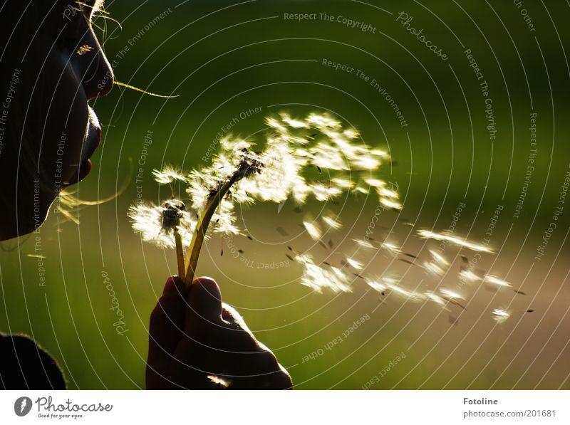 Flieg Schirmchen flieg! Mensch Kind Natur Hand Mädchen weiß Blume grün Pflanze Gesicht Wiese feminin Kopf Mund Wärme Luft
