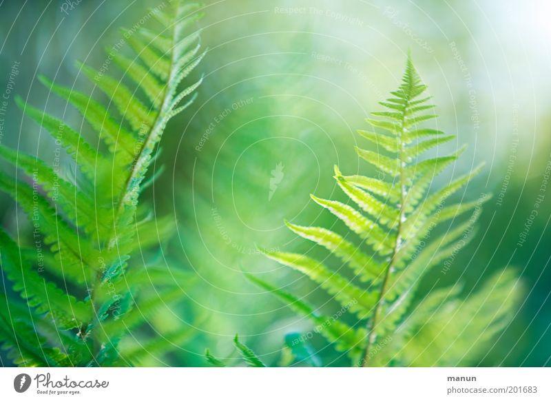 rêverie Natur grün Sommer ruhig Frühling Garten elegant frisch ästhetisch fantastisch exotisch harmonisch Leichtigkeit Umweltschutz Pflanze