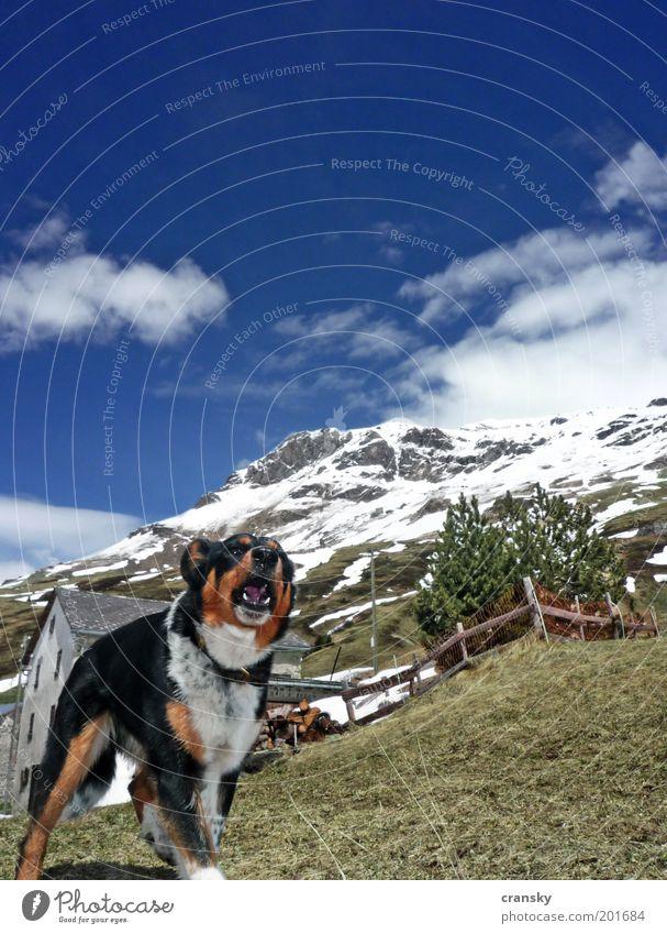 hundewetter Hund Himmel Ferien & Urlaub & Reisen Sommer Tier Berge u. Gebirge Schnee Frühling Felsen Angst Tourismus wandern Schönes Wetter Ausflug Schutz Alpen