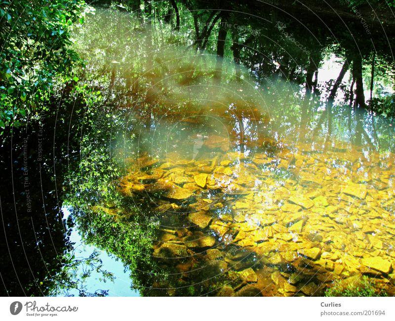 Märchenwelt Natur Wasser Baum grün Sommer Ferien & Urlaub & Reisen ruhig Blatt gelb Herbst Frühling träumen Stein Landschaft Stimmung Fluss