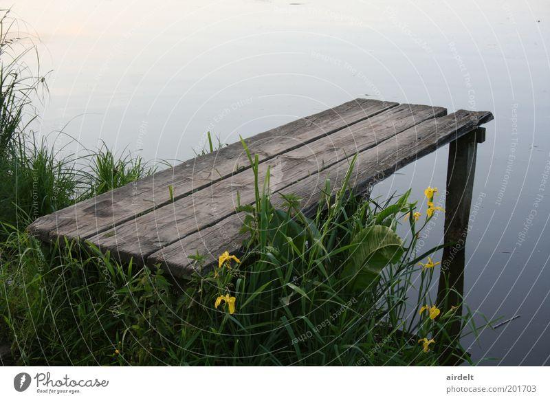 Steg Natur Wasser grün Pflanze Sommer ruhig Gras See Landschaft Idylle Frühlingsgefühle Licht