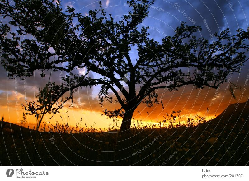 Baum mit Feuerbrand Natur Baum Wolken gelb Wiese Gefühle Gras Frühling Garten Holz Landschaft Stimmung Wetter Umwelt Horizont Klima
