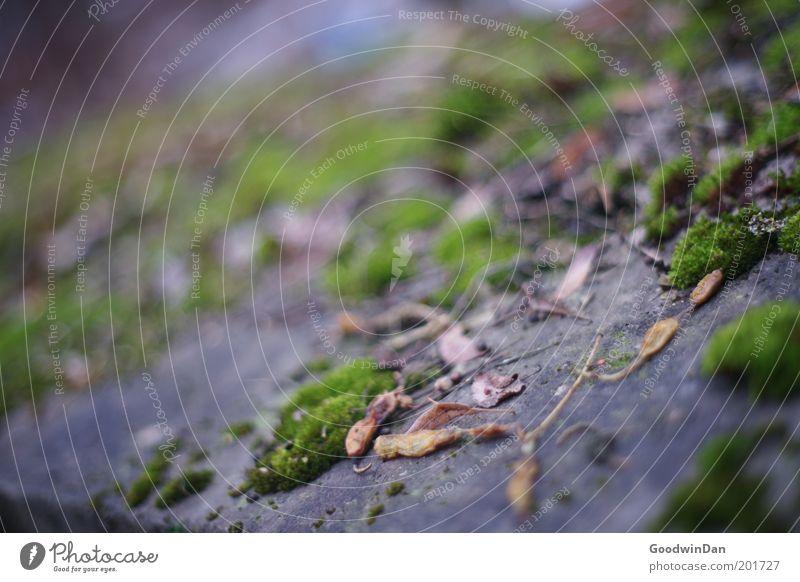 Ohne Moos nix los Natur grün Pflanze Fassade nah weich Urelemente Geländer