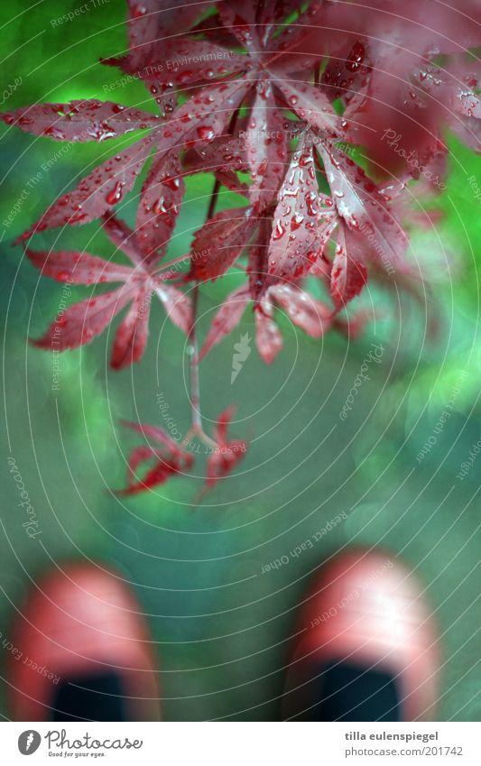 Nach dem Regen Natur grün Pflanze rot Sommer Blatt Farbe Erholung Frühling Umwelt Wassertropfen nass Sträucher Tropfen