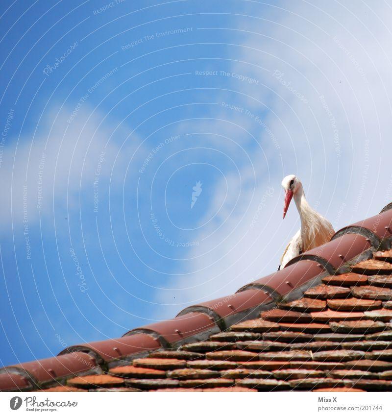 ich komm am 3.10. Haus Natur Himmel Schönes Wetter Dach Tier Wildtier Vogel warten Gefühle Glück Vorfreude Storch schwanger Märchen Nest brütend Farbfoto