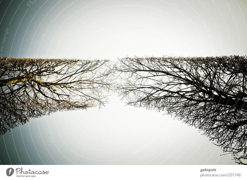 Zusammenwachsen v2.0 Pflanze Baum Umwelt Wachstum Sträucher einzigartig berühren Unendlichkeit Zusammenhalt aufwärts Richtung Symmetrie Geäst Grünpflanze Hecke himmelwärts