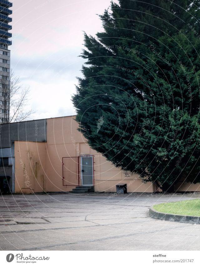 vernachlässigt Baum Traurigkeit träumen Tür offen Hochhaus trist Tanne Gitter Plattenbau Krise Supermarkt Misserfolg Stadtrand perspektivlos Hintertür