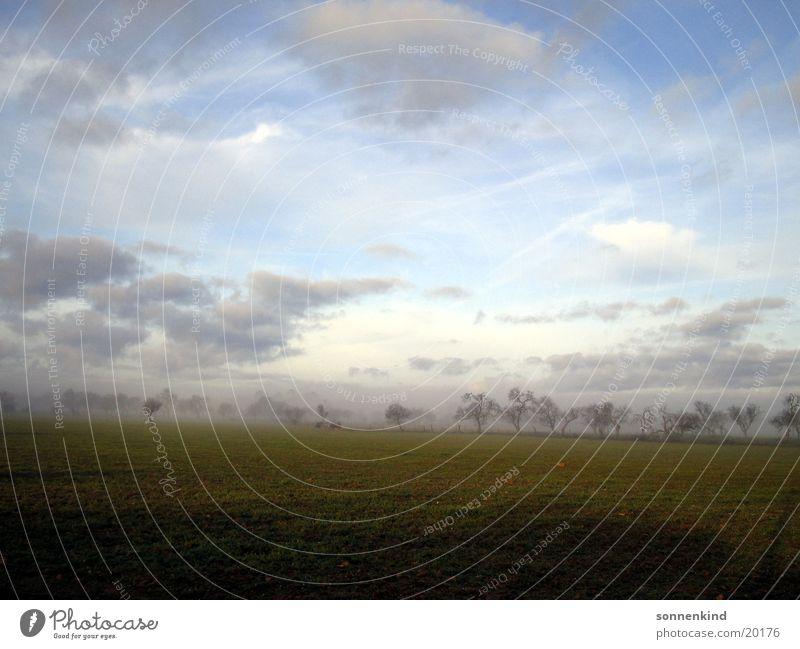 Südlicher Wintermorgen Himmel Wolken Wiese Tau Mallorca Sonnenaufgang Morgennebel Mandelbaum