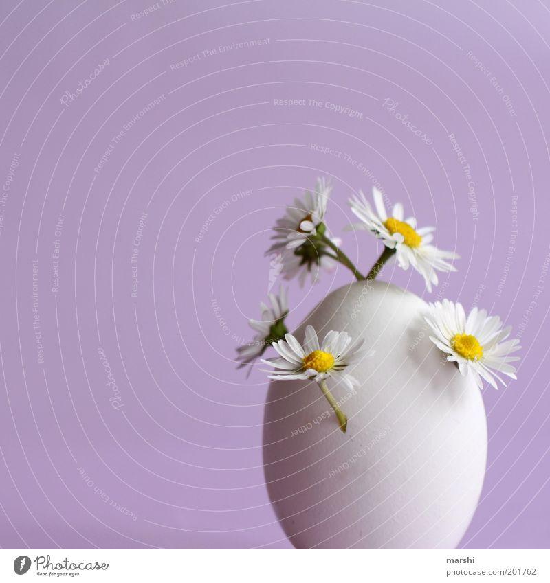 Das ÜberraschungsEi Lebensmittel Ernährung Pflanze Blume violett weiß Gänseblümchen Wachstum sprießen seltsam klein Vase Dekoration & Verzierung Farbfoto
