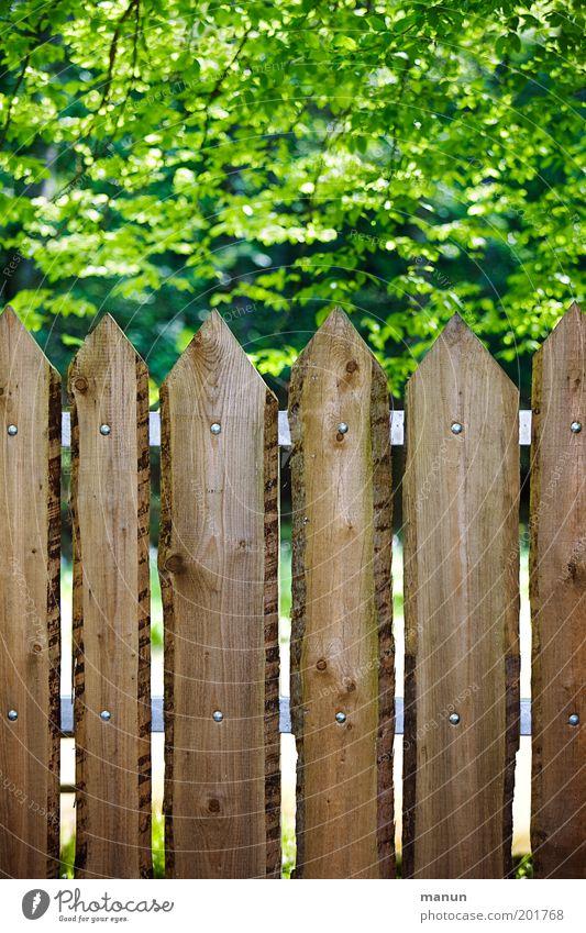 Abstandshalter Häusliches Leben Umwelt Natur Baum Blatt Garten Park Zaun Holz bedrohlich Idylle Kontrolle Ordnung Sicherheit Sorge Umweltschutz Verbote Grenze