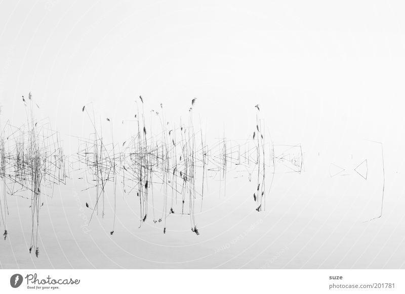 Stille Natur Wasser Pflanze ruhig kalt Gras See Landschaft abstrakt Umwelt Sauberkeit Klarheit natürlich Schwarzweißfoto Licht Wasseroberfläche