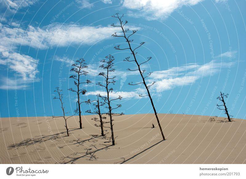Himmel Meer blau Pflanze Wolken Einsamkeit Sand Landschaft hoch Wachstum Klima Wüste Hügel Spanien Schönes Wetter Botanik