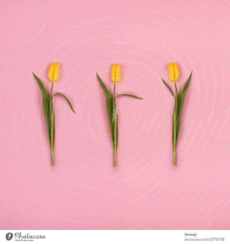Schöne Tulpen auf rosa Papier, Draufsicht Natur Pflanze Sommer Farbe schön Blume rot Blatt gelb Blüte natürlich Wachstum Dekoration & Verzierung frisch retro